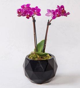 Dekoratif Vazoda Mini Orkide