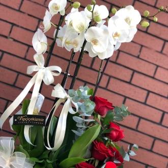 Dört köşe orkide gül bahçesi