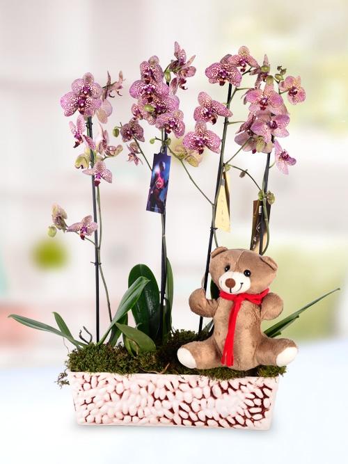 Ayıcık Figürlü Orkide Bahçesi