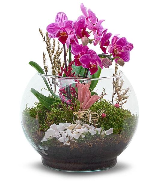 Kaktüs Cam Mini Orkide Teraryum