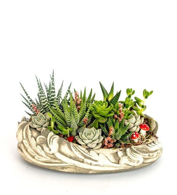 Succulent Bahçesi
